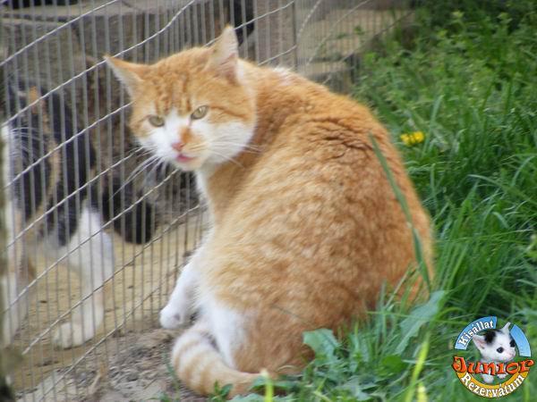 995c046dac669 Pörszi már elfogadott és aszem - legyen bárki macskája is - a magamévá  teszem és töketlenítem